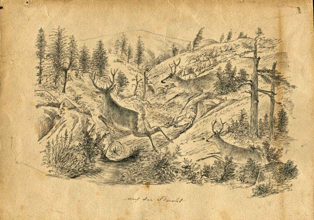Adolf Aschoff and Marmot Oregon